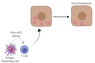 apc-tcell-viruspersistence
