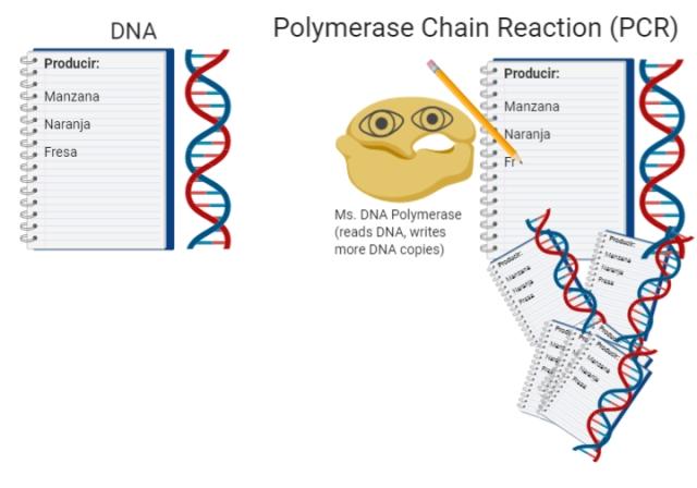 DNA_RNA RT-PCR3